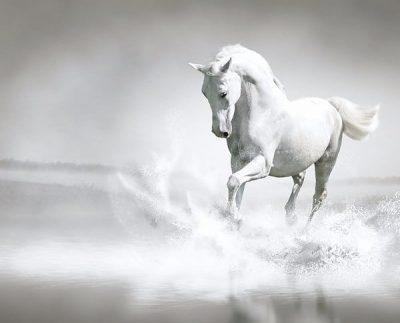 Белый конь 16 солнечный день