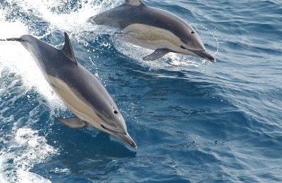 Дельфин 9 солнечный день