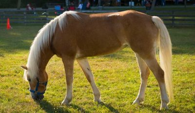 Лошадь животное шатабхиша