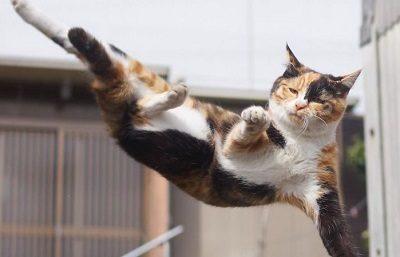 Кот животное Ашлеши