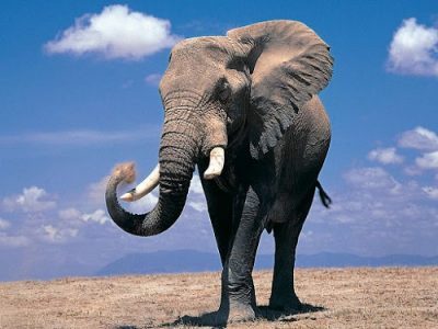 Слон символ Бхарани