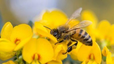 Пчела Свати